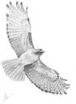 Птах, 2004.